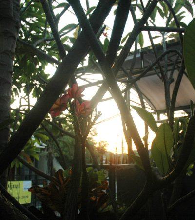 Mengapa Surabaya Lebih Dingin di Pagi Hari