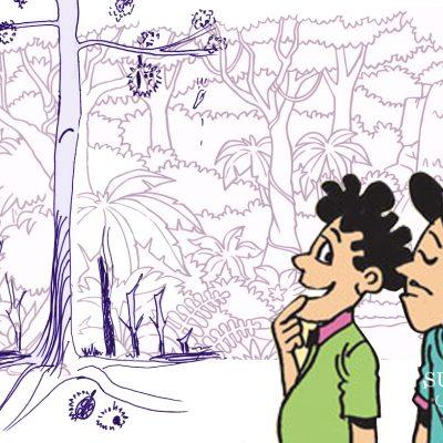 Mengapa Durian Diikat di Pohon?