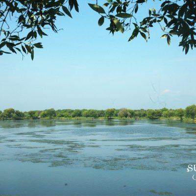 Rencana Kebun Raya Mangrove Terbesar di Pantai Timur Surabaya