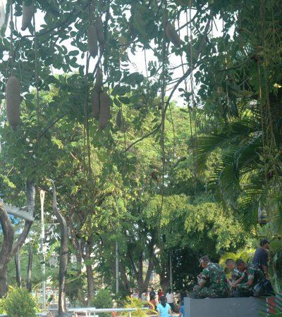 Surabaya Membangun Ekosistem dengan Hutan Kota