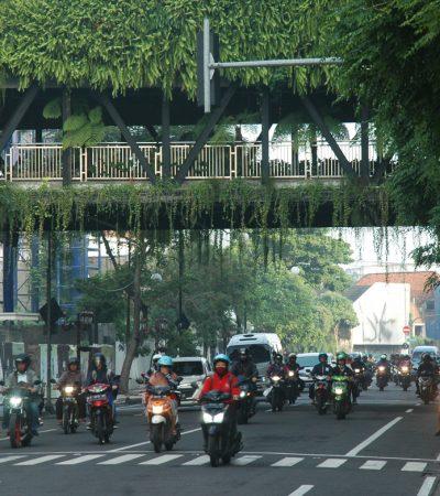 Hijaunya Taman Gantung Tunjungan Surabaya di Musim Penghujan 2019