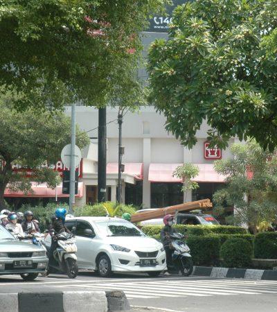 Rindang Pohon di Traffic Light, Tempat Jeda Pelepas Lelah