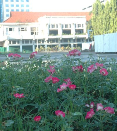 Bertanya tentang Jatidiri Alun-alun Kota Surabaya di Balai Pemuda