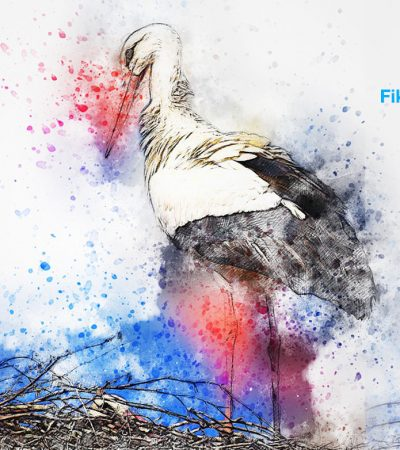 Burung-burung Bangau