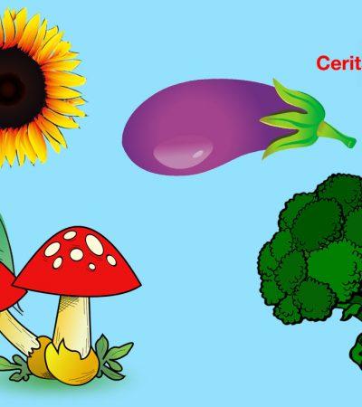 Cerita Kebun Sayur