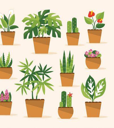 Mengenal Penggolongan  Tumbuhan